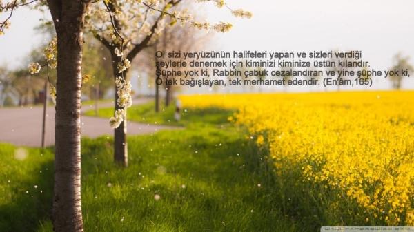 ENAM SURESİ 165
